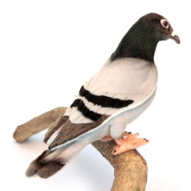 Peluche Pigeon 20 cm